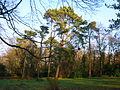 Spiers woodland 2.JPG