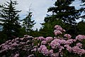 Spring-trees-flowers-sky - West Virginia - ForestWander.jpg
