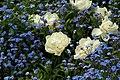 Spring in London (7113816327).jpg