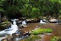 Springtime-forest-waterfall-wv - West Virginia - ForestWander.jpg