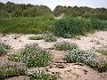 St Aidan's Dunes - geograph.org.uk - 916624.jpg