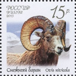 Stamp of Russia 2013 No 1670 Ovis nivicola.jpg