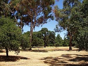 Stanford University Arboretum - Stanford University Arboretum.
