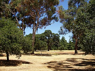 Stanford University Arboretum botanical garden