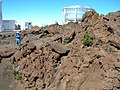 Starr-051202-5611-Asplenium adiantum nigrum-habitat-Science City-Maui (24823754286).jpg