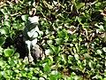 Starr-110307-2018-Eichhornia crassipes-habitat in pond with frog statue-Kula Botanical Garden-Maui (24709769339).jpg