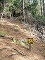 Starr 041221-1838 Pinus radiata.jpg