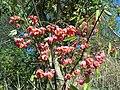 Starzyce owoce jesienne.jpg