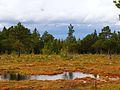 Stormyra - panoramio.jpg