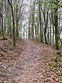 Stromberg-Schwäbischer Wald-Weg HW 10 - panoramio (1).jpg