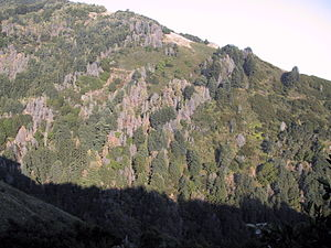 Phytophthora ramorum - A hillside in Big Sur, California, devastated by sudden oak death