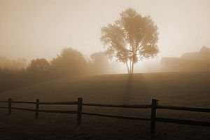 English: Sunrise in the fog, near Horicon, Wis...