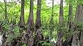 Swamp Quiz.jpg