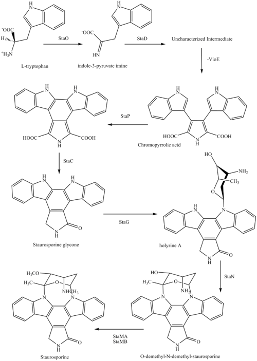 Synthesis of Staurosporine