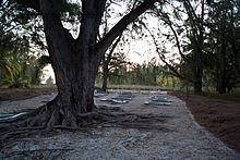 Il cimitero sull'isola Juan de Nova.