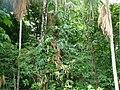 Tabasco selva.jpg
