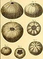 Tableau encyclopédique et méthodique des trois règnes de la nature (1791) (14765041931).jpg