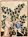 Tacuin pastèque10.jpg
