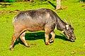 Taronga Western Plains Zoo IMG 0625 (41733623404).jpg