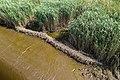 Technisch-biologische Ufersicherung an der Wümme, Versuchsstrecke 1 (50678792407).jpg