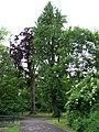 Teplice, stromy mezi zámkem a Dolním rybníkem.jpg