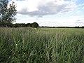 Teversham Fen - geograph.org.uk - 1481684.jpg