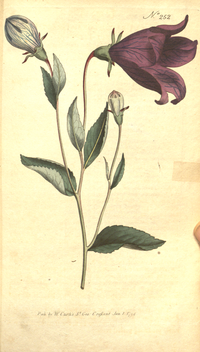 The Botanical Magazine, Plate 252 (Volume 7, 1794).png