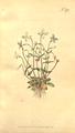 The Botanical Magazine, Plate 370 (Volume 11, 1797).png