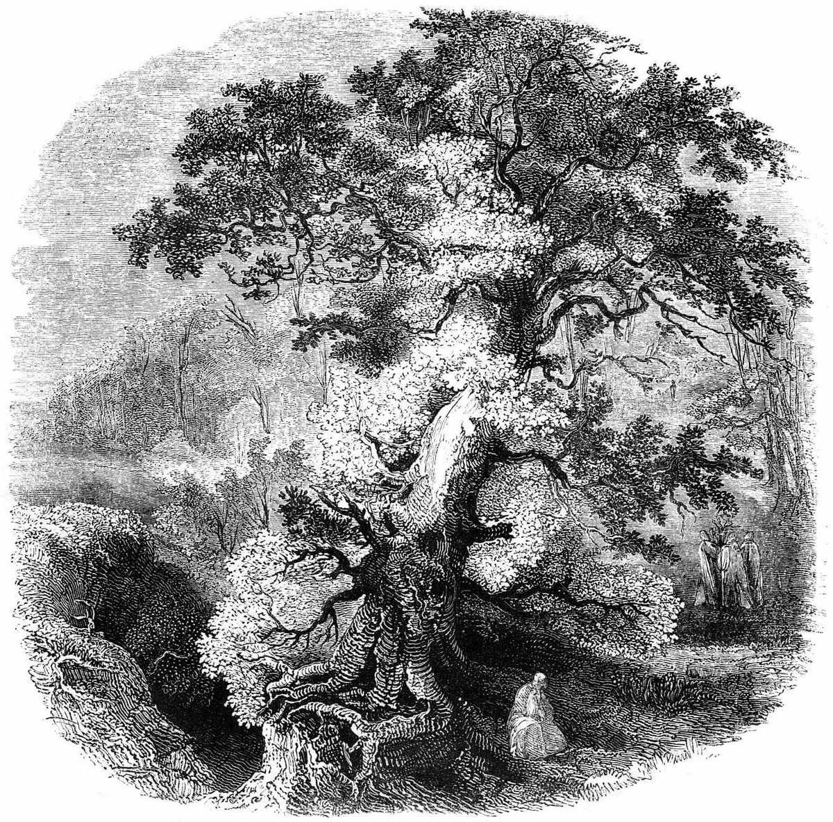 Celtic sacred trees wikipedia buycottarizona Image collections