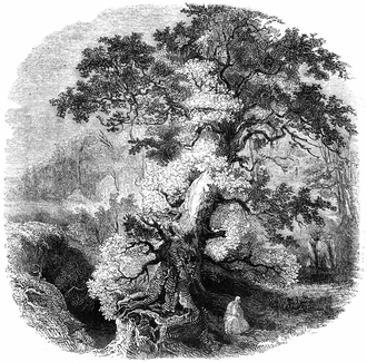 "Celtic sacred trees - ""The Druid Grove"" (1845)"