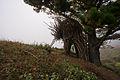 The Nest - Big Sur (6498386927).jpg