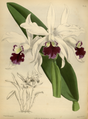 The Orchid Album-01-0092-0030.png