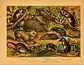 The animal kingdom (Plate V) (6130242926).jpg
