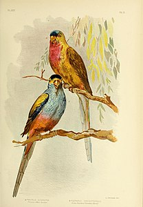 The birds of Australia (16245212203).jpg
