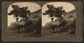 The whistling elk whose weird, flute-like cry echoes from hill to hill, Montana, U.S.A, by Keystone View Company.png