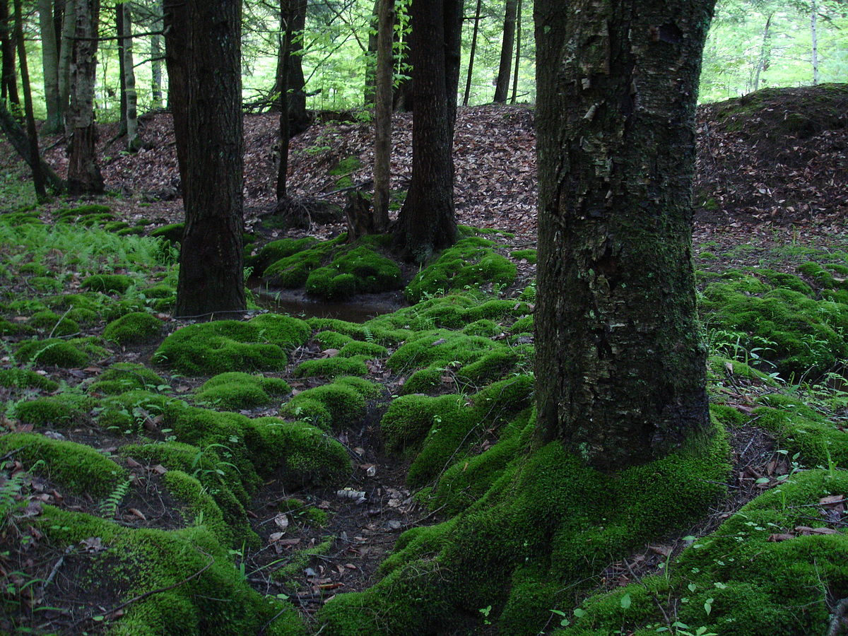 Mosses and ferns reproduce asexually by forming gas