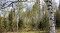 Torsby N, Sweden - panoramio (12).jpg