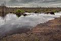 Totes Moor peat exploitation landscape Germany 02.jpg
