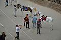 Tourists - Ridge - Shimla 2014-05-07 1010.JPG