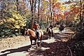 Trail Ride-Skyland on Old Rag Fire Road (13083895373).jpg