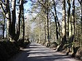 Tree-lined road, Upper Linhay - geograph.org.uk - 1737581.jpg