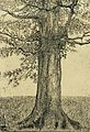 Tree by Theo van Doesburg Centraal Museum AB4203.jpg