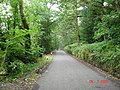 Tree covered lane in Conwy - geograph.org.uk - 30098.jpg