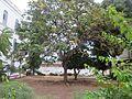 Tree in zanzibar.jpg