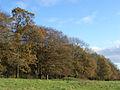 Trees, Martinsell Hill - geograph.org.uk - 282554.jpg