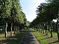 Trees in Cemetery, Bebington - geograph.org.uk - 197416.jpg