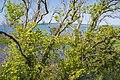 Trees in Sainte-Lucie Island, Aude.jpg