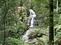 Triplet Falls at Otway National Park (494351886).jpg