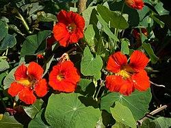 Fleurs et feuilles à la Réunion