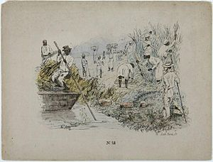 "History of sugar - A 19th-century lithograph by Theodore Bray showing a sugarcane plantation. On right is ""white officer"", the European overseer. Slave workers toil during the harvest. To the left is a flat-bottomed vessel for cane transportation."